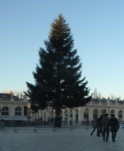 Spruce in Stanislas