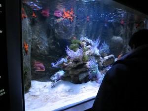 Find Nemo @ Aquarium